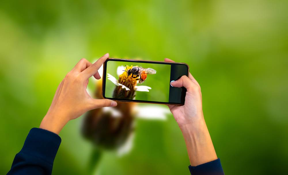 bee,smartphone,beauty,hold,beautiful,bloom,insect,communication,