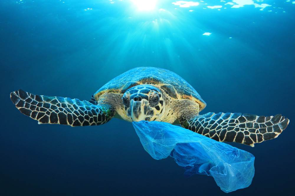 discarded,ecosystem,bag,bottle,pollution,life,marine,sea,diving,
