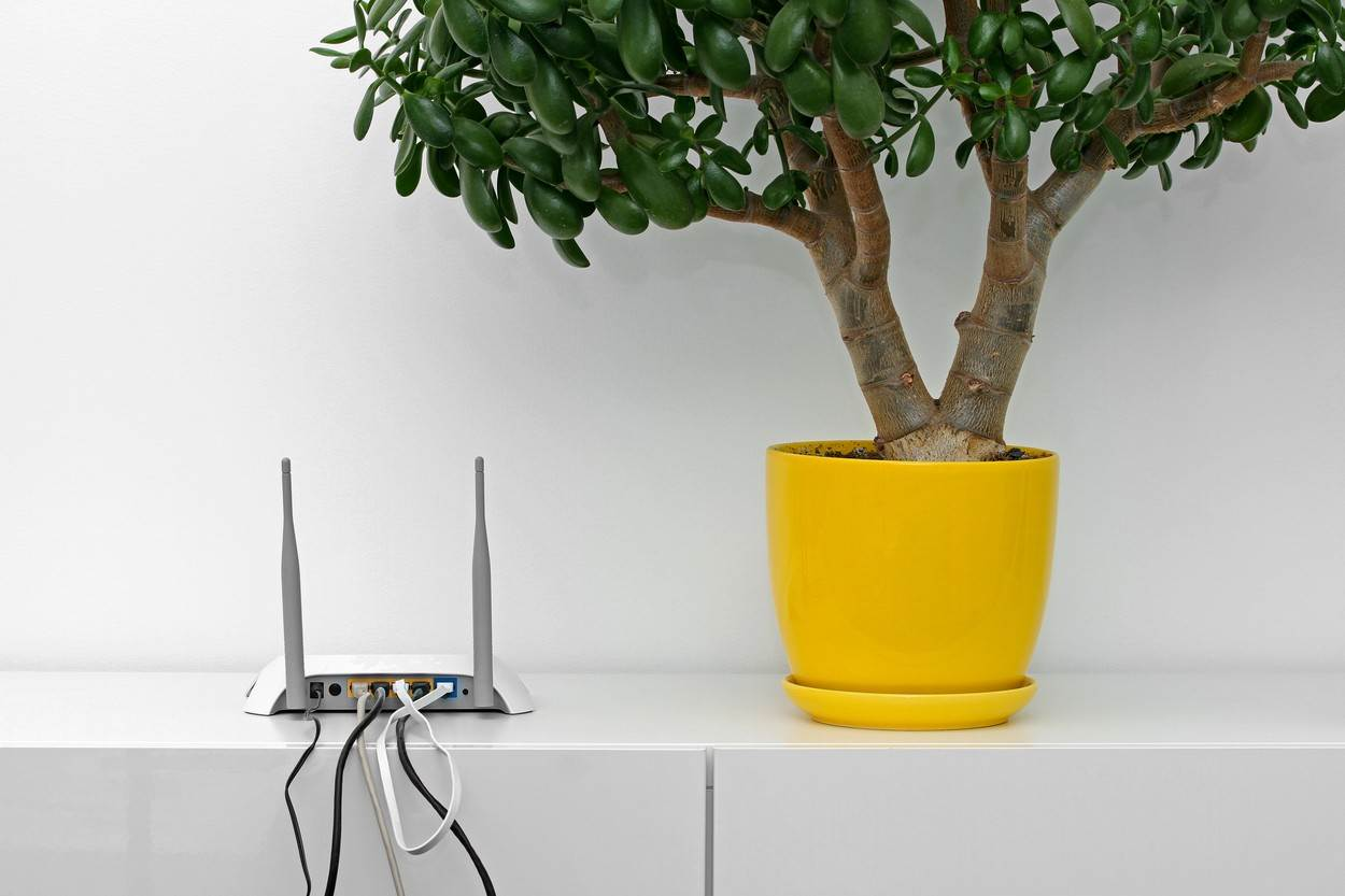 router;wifi;internet;room;interior;white;modern;office;antenna;cord;wired;hub;flower;flowerpot;pot;broadband;cable;digital;technology;computer;shelf;yellow;rack;commode;minimalism;home;modem;equipment;panel;local;web;access;wire;wireless;plug;ethernet;switch;network;net;hardware;data;port;firewall;connection;gateway;connect;point;communication;design;online
