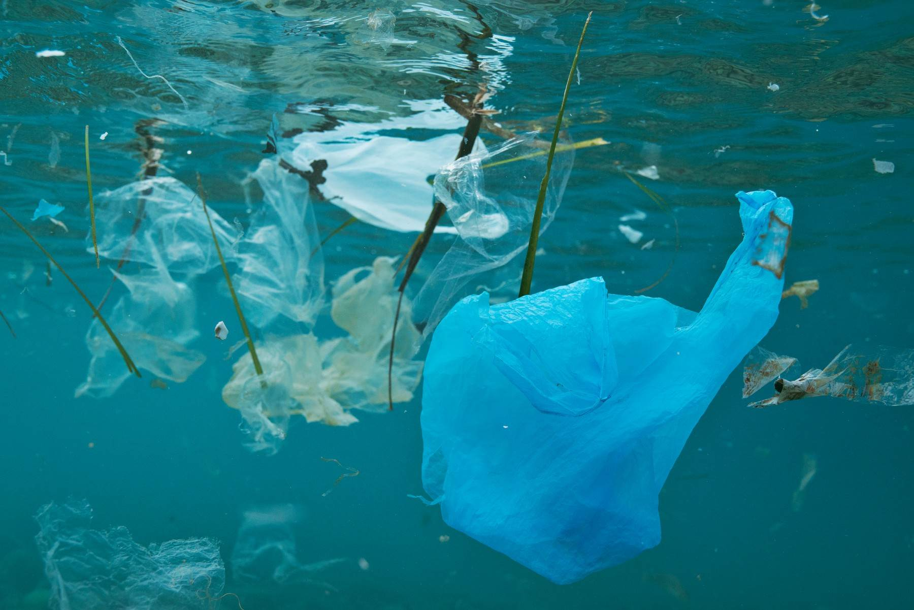BIOLOGICAL;ECOLOGICAL;ECOSYSTEM;ENVIRONMENT;ENVIRONMENTAL IMPACT;EUROPEAN;NATURE;NO-ONE;NOBODY;PLASTIC;PLASTICS;POLLUTED;POLLUTION;SPANISH;UNDER WATER;PLASTIC BAG;CARRIER BAG;WASTE;JUNK;RUBBISHEUROPE;SEA;UNDERWATER;OCEAN;MEDITERRANEAN;SPAIN;SURFACE FLOATINGBIOLOGY;MARINE BIOLOGY;ECOLOGY;category_code_environment