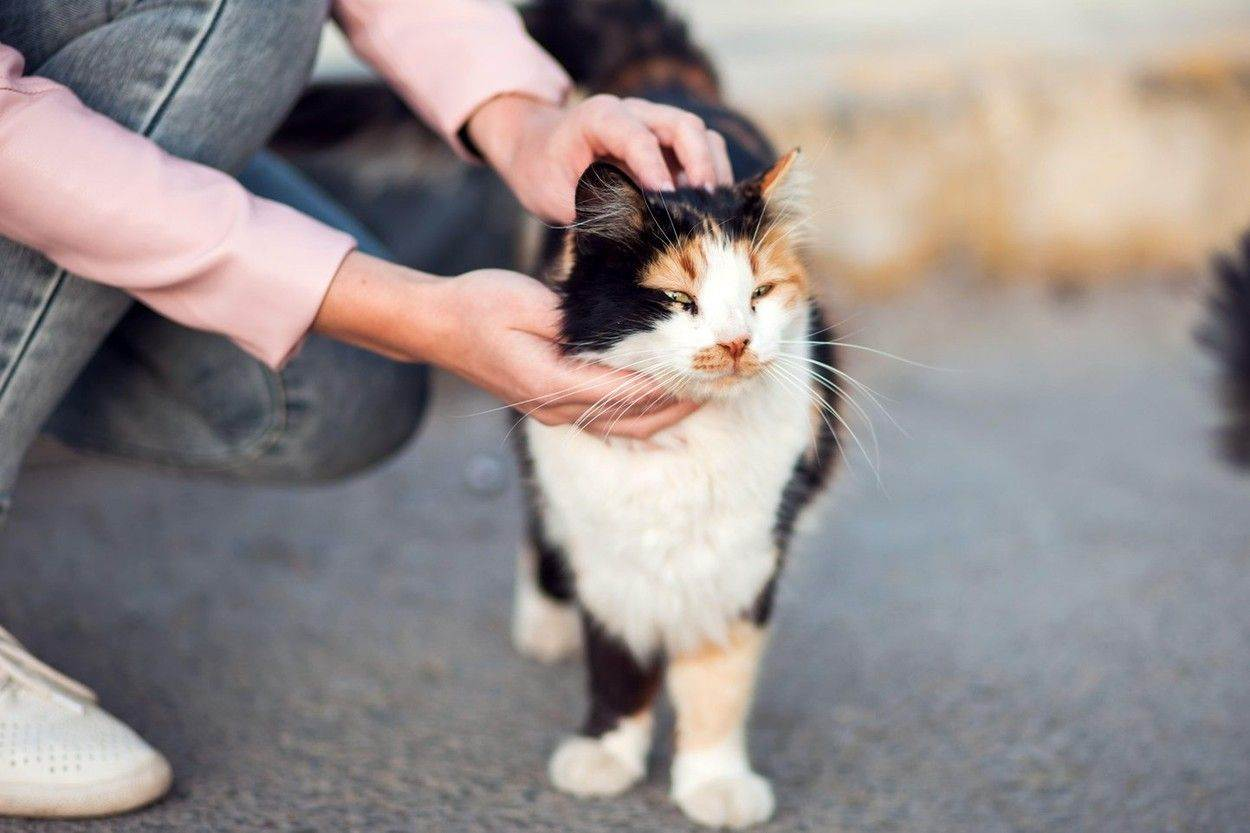 animal;cat;homeless;kitten;hungry;street;dirty;alone;garbage;abandoned;pet;outdoor;stray;mammal;feline;fur;domestic;wild;looking;cute;nature;beautiful;tabby;white;eye;portrait;shelter;urban;sad;adoption;one;black;life;furry;kitty;hair;poor;tail;food;needy;town;paw;sick;care;city;small;outcast;poverty;allergy;dreary;NOT_EDITORIAL_ONLY;alamyunknown